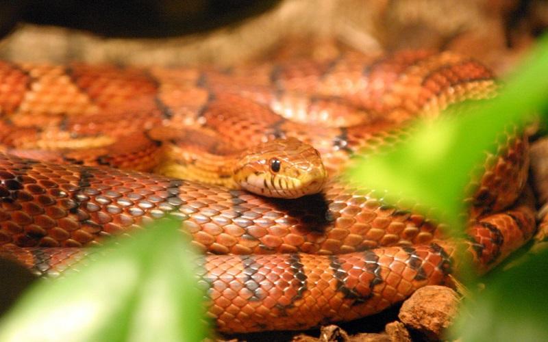 В жилом доме восточного округа столицы МЧС поймало змею