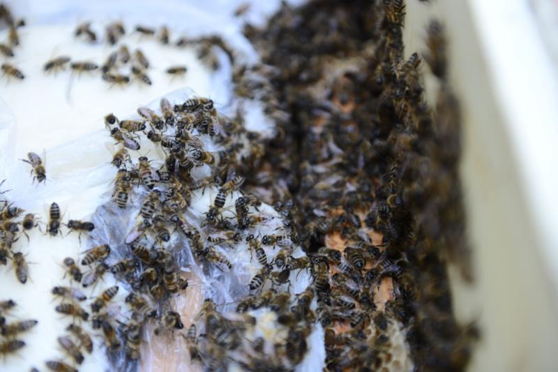 Пчелы атаковали детский сад в Ново-Переделкино