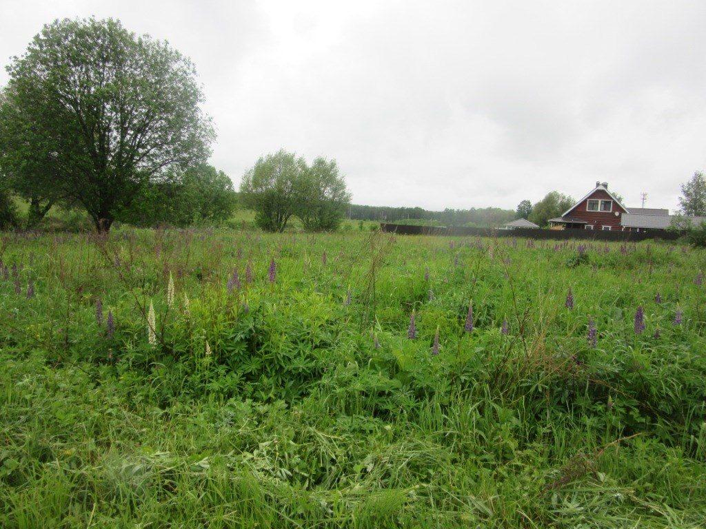 Два земельных участка в Троицком округе выставлены на торги