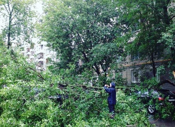 Дерево рухнуло на дом в центре Москвы