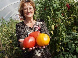 9 августа 2016 года. Вороновское. Людмила Кретова собрала в этом году на своем участке большой урожай помидоров.