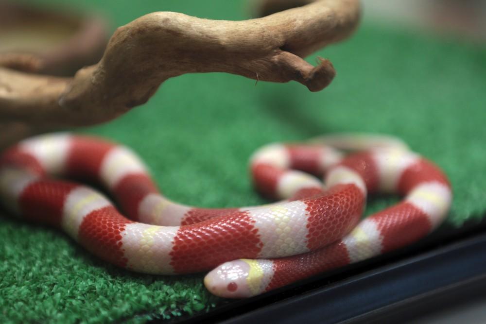 МЧС Новой Москвы разыскивает змею в жилом доме