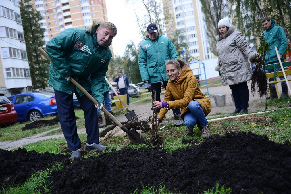 28 апреля 2016 года. Жители «Татьяниного парка» вместе с компанией-застройщиком выбрали и посадили деревья в развивающемся микрорайоне