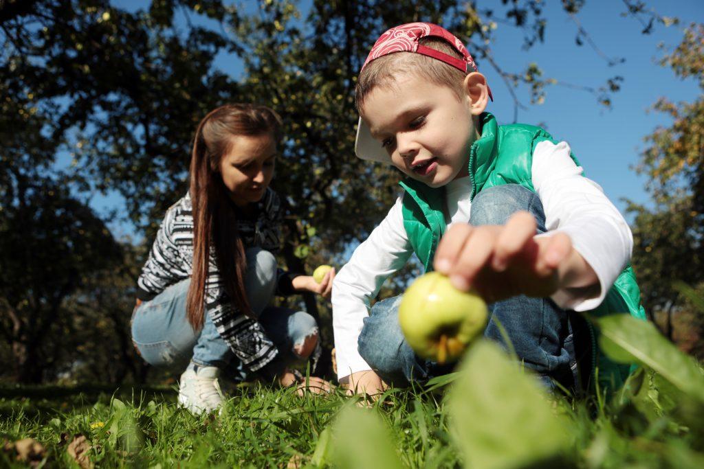 Дошкольники из Щербинки собрали овощи и фрукты для животных