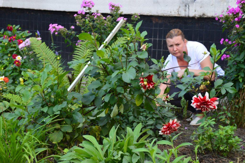 Во дворе многоэтажки в Марушкино жительница создала цветочный сад