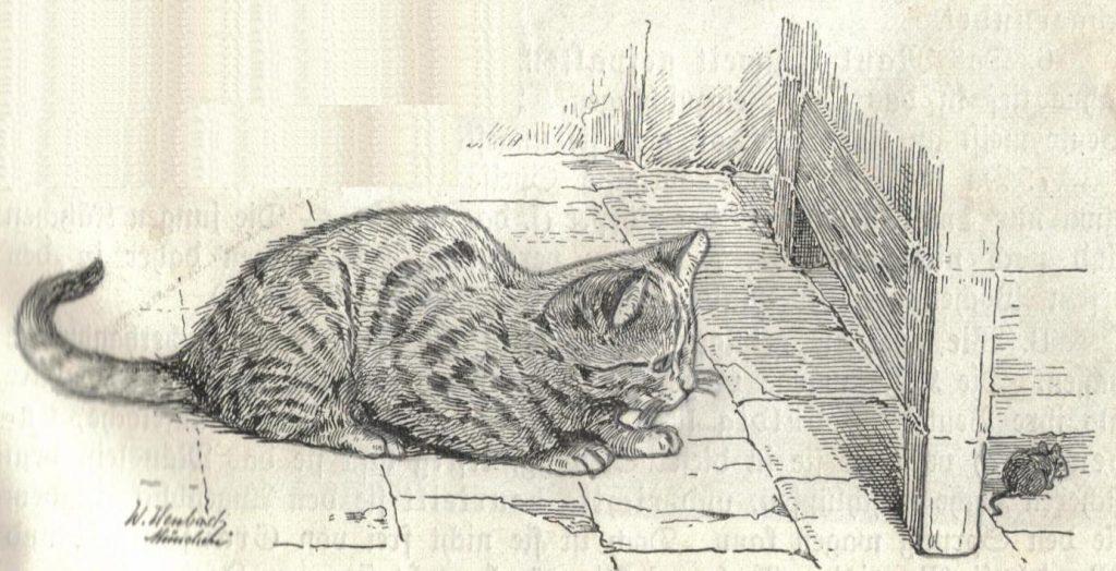 Елизавета Петровна: Кота в каждый двор