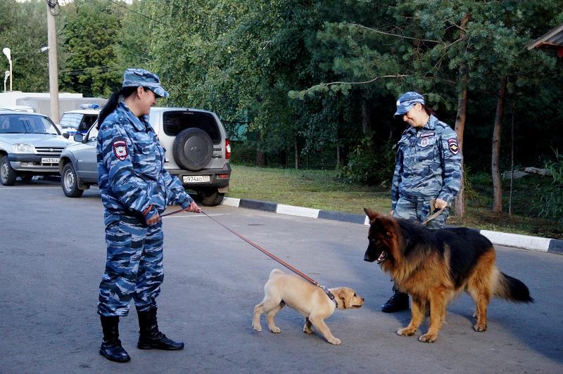 Лабрадор Рудольф — уже «курсант», но еще не полицейский. Пес Рэй и Антонин Сальник всегда готовы к новым подвигам.