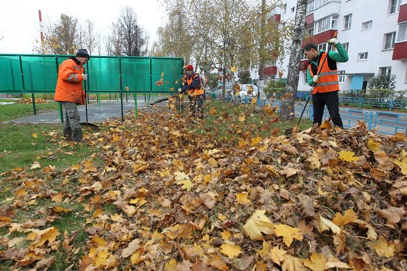 11 октября 2016 года. Красная Пахра. Дворник Азамат Намазов сгребает опавшие листья в кучу