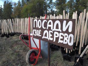 Префект посадил лес. А жители помогли. Фото: Александр Корнеев.