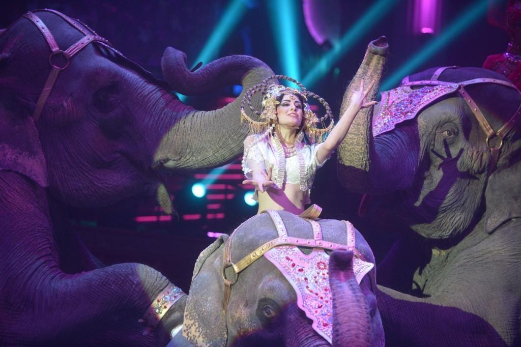 Московский цирк поблагодарил дошкольников из Щербинки за подаренную животным еду