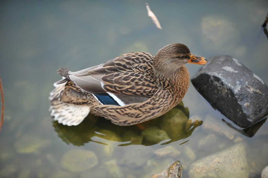 Диких животных из Центра реабилитации вернут в среду обитания