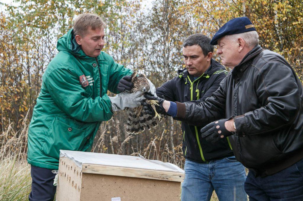 Десять диких птиц, восемь уток и черепаха стали новыми обитателями лесов Новой Москвы