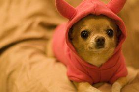 Ученые открыли способ продлить жизнь домашним собакам на год. Фото: Википедия