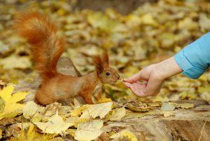 5 лучших способов подготовиться к зиме: учимся у животных. Фото: pixabay.com
