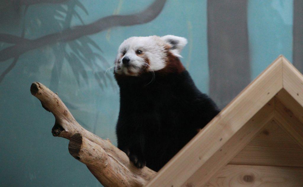 Власти предложили инвесторам построить в Новой Москве зоопарк или сафари-парк