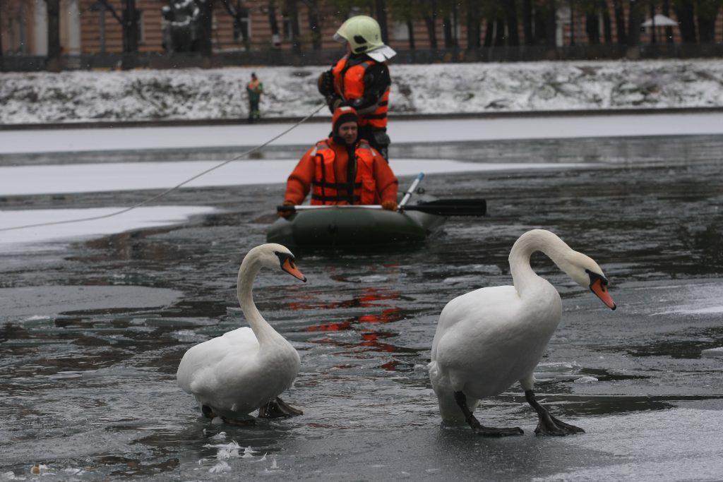 Больше всего заявок на спасение водоплавающих птиц поступает из Новой Москвы