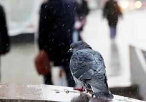 """Минувшая ночь стала самой холодной с начала осени. Фото: """"Вечерняя Москва"""""""