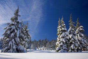 В Троицке объявили о компании, которая будет следить за состоянием лесов. Фото: pixabay.com