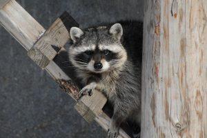 """Для животных в """"Сафари-парке"""" создадут естественную среду. Фото: пресс-служба Московского зоопарка"""