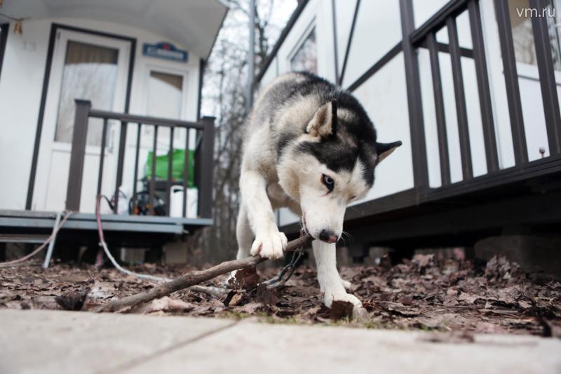 Москвичам могут запретить содержание крупных собак в квартирах