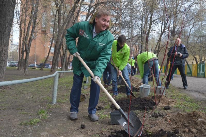Зеленый фонд Москвы пополнят 40 тысяч деревьев и 300 тысяч кусарников