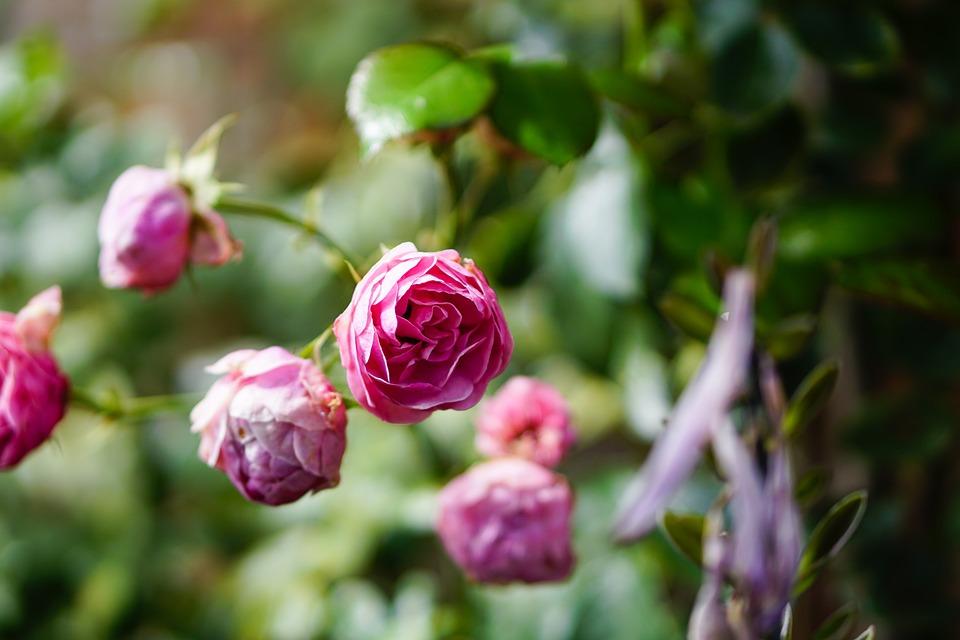 Валентин Катаев каждое утро дарил жене цветы