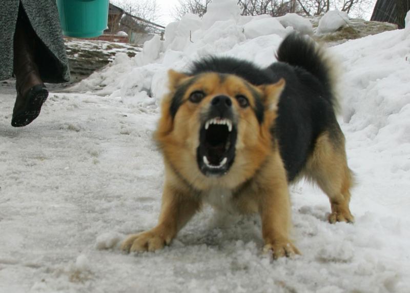 Бойцовская собака напала на двух женщин в Москве