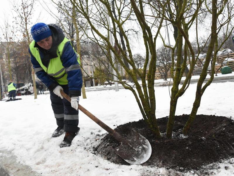 Около 300 деревьев и 400 кустарников высадят в Роговском
