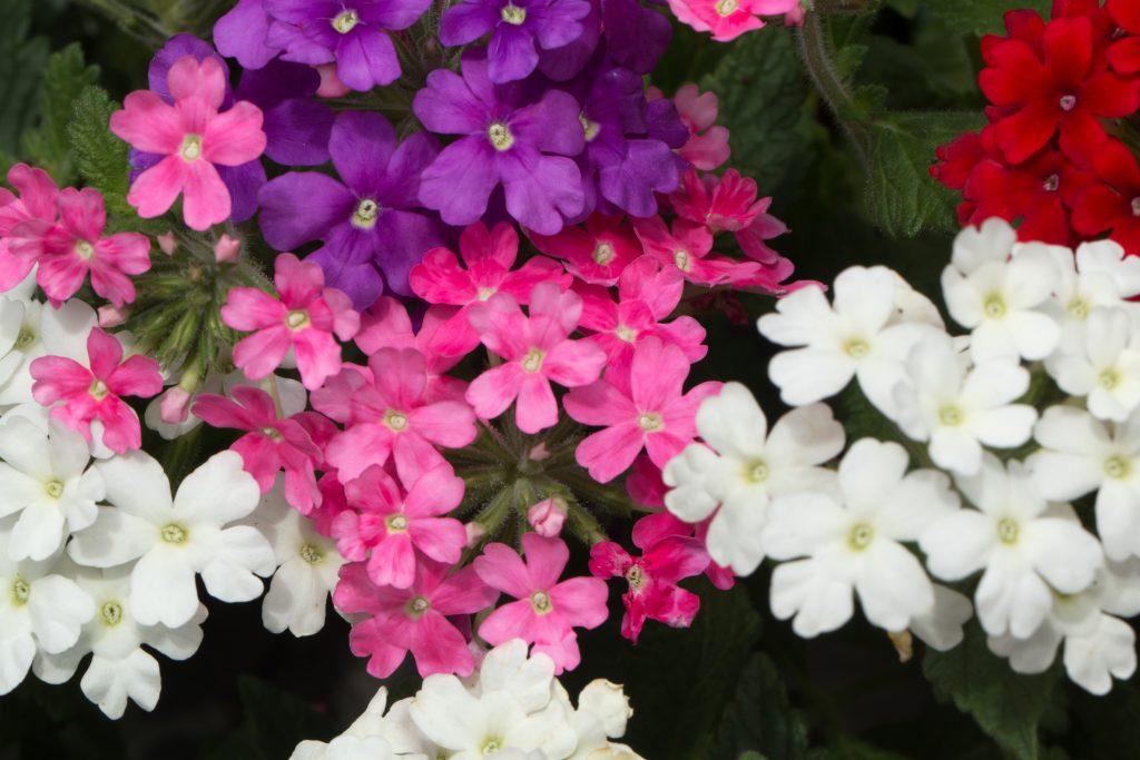 Ударим цветом грядущим летом