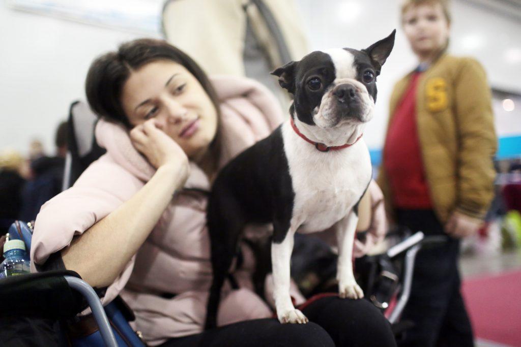 Швейцарские ученые выяснили, как собаки манипулируют людьми