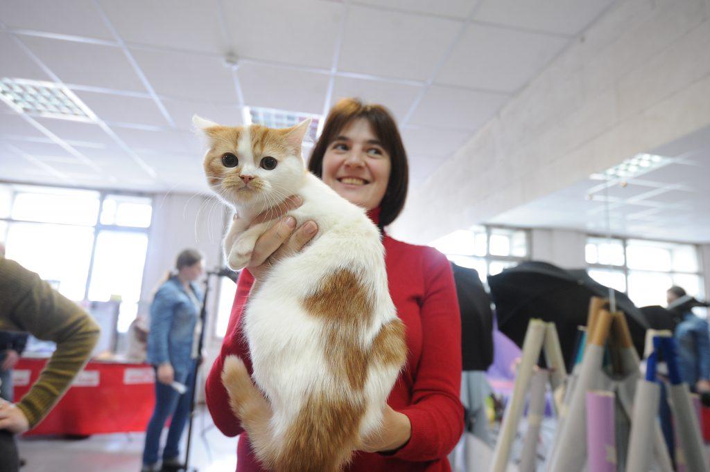 Американские ученые опровергли эгоизм котов