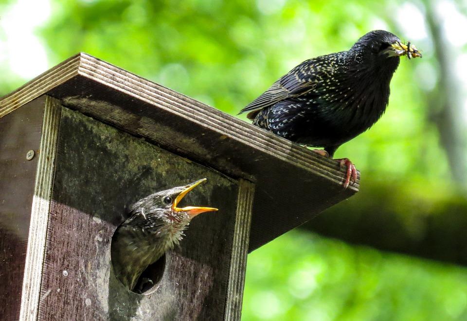 Мастер-класс будет приурочен ко Дню птиц. Фото: pixabay.com