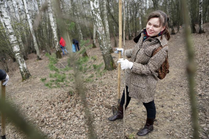 Леса Новой Москвы очистили от сухостоя