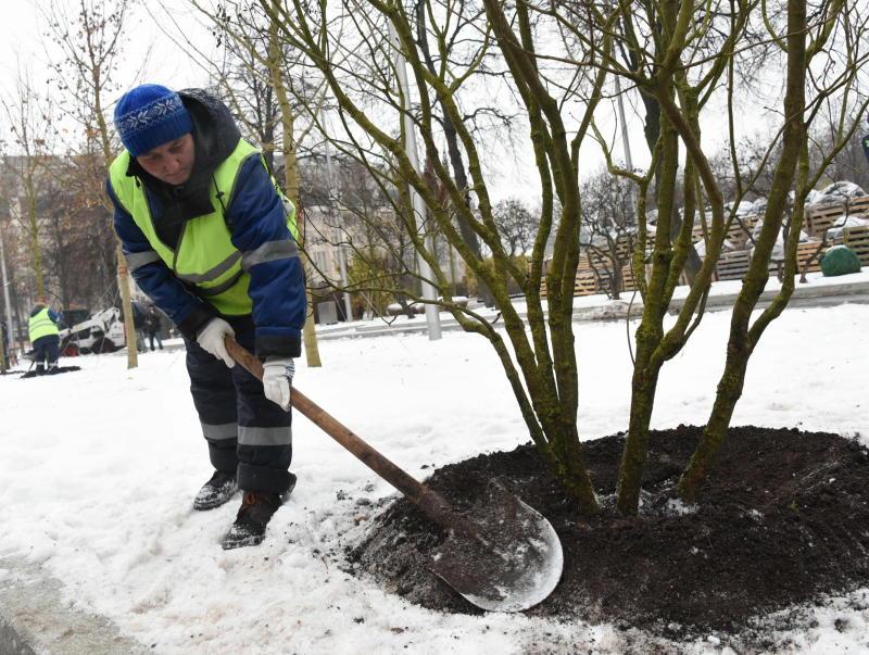 Порядка 130 аварийных деревьев опилят в Новой Москве