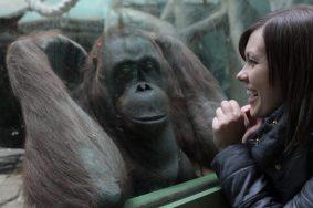 С 1 мая Московский зоопарк начнет работать на полтора часа раньше