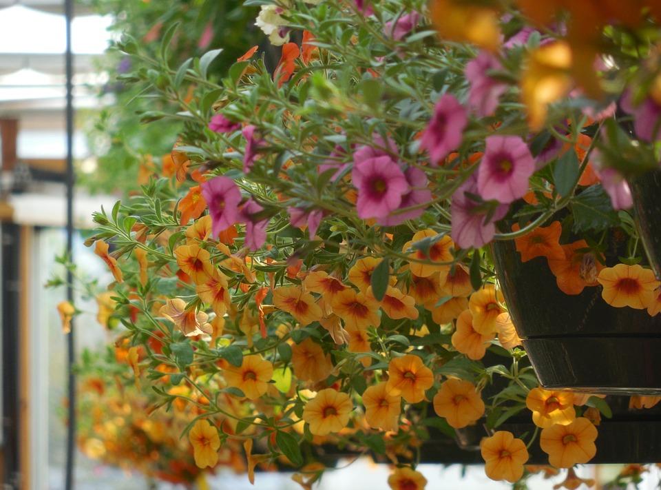 Около 13 тысяч однолетних растений высадят в поселении Новофедоровское