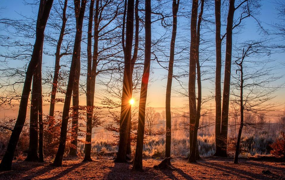 Деревья — как люди. Не все понимают по-хорошему