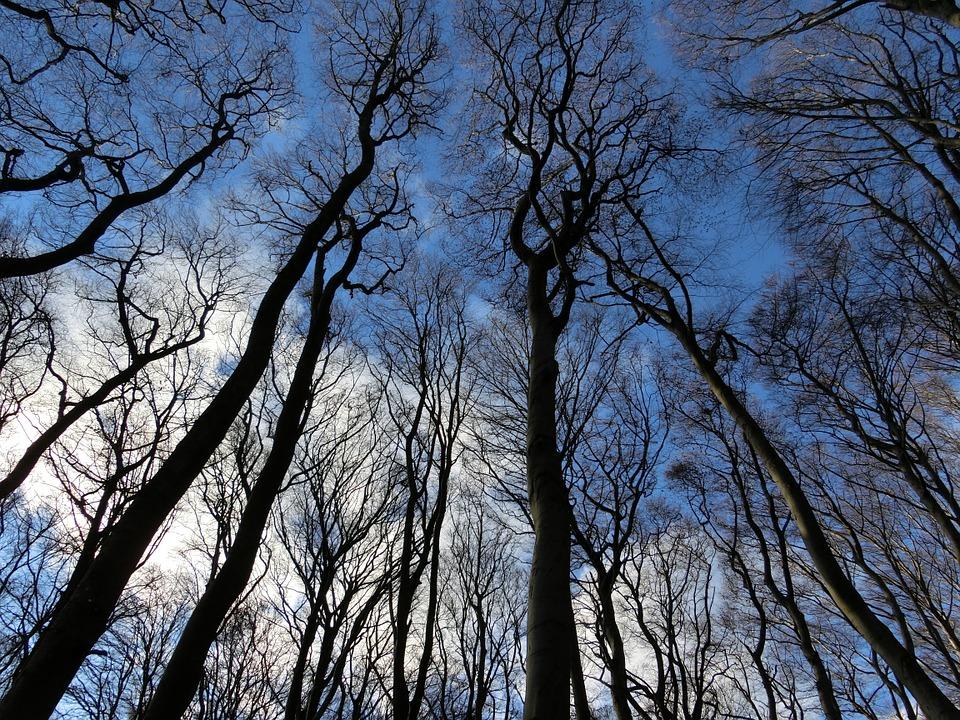 Более 70 аварийных деревьев ликвидируют в Десеновском