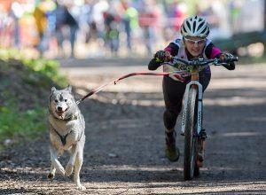 14 мая 2017 года. Троицк. Люди, конечно, соревнуются за призовые места, а собаки? Фото: Сергей Голотвин