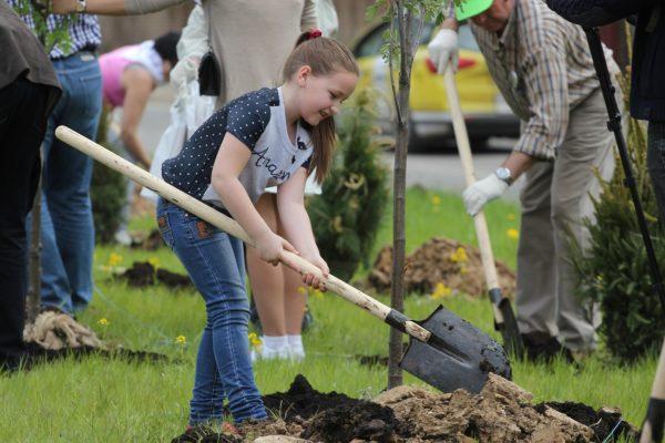 Свыше 150 деревьев посадили на Аллее Дружбы в Воскресенском