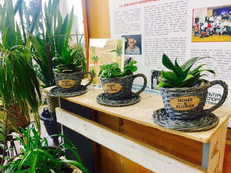 Акция «Зеленая точка»: ветеранам и героям подарят комнатные растения