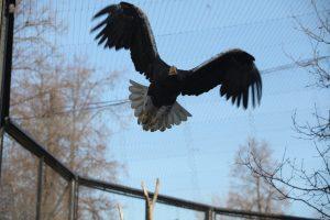 Московский зоопарк вводит скидки для посетителей с «птичьими фамилиями»