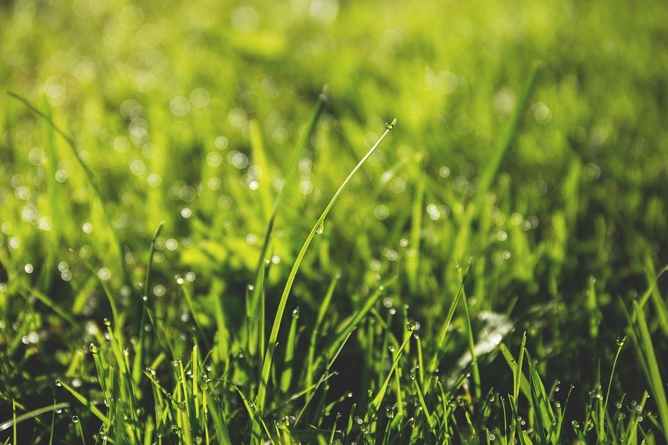 Возле клуба «Русь» в Кленовском обновят дорожное полотно и засеют газон