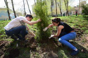 Около 150 деревьев украсят поселение Воскресенское. Фото: Антон Гердо, «Вечерняя Москва»