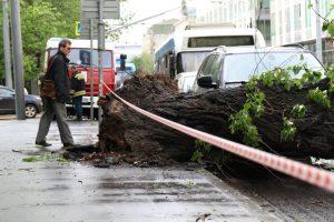 Поваленные деревья создали проблемную ситуацию на дорогах. Фото: Максим Аносов