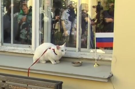 Победу сборной России в первом матче Кубка конфедерации предрек кот из сада Эрмитаж