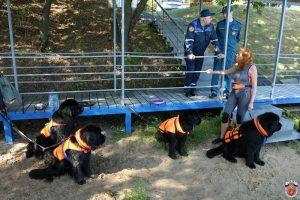 В Москве увеличится число собак-спасателей