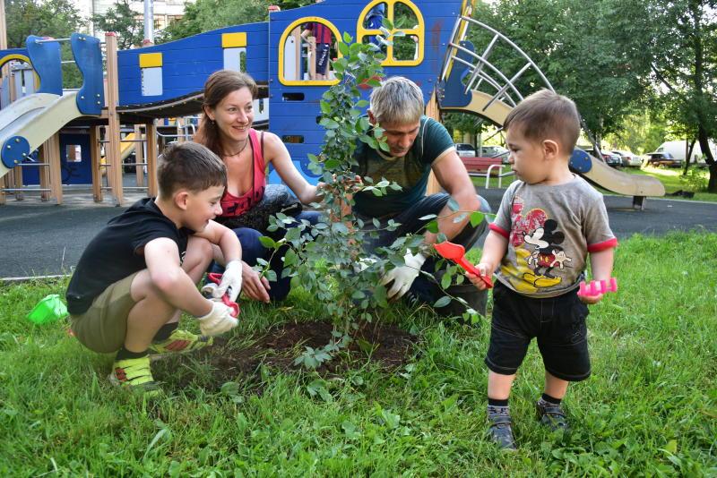 Более 100 кустов кизильника посадили в Новой Москве