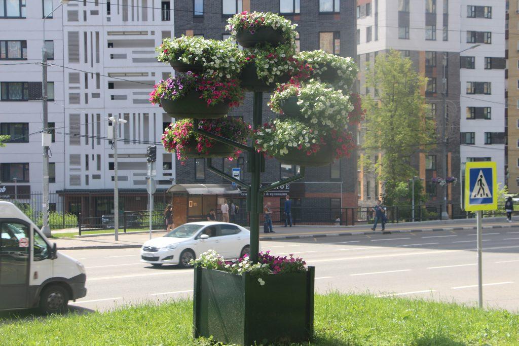Новое цветочное оформление появилось в поселении Сосенское