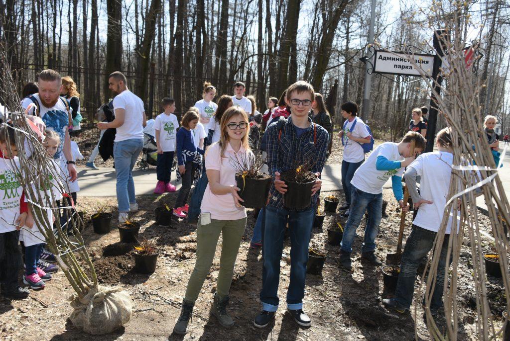 Несколько тысяч деревьев получили санитарную обработку
